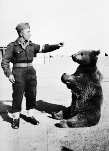 Wojtek_the_bear