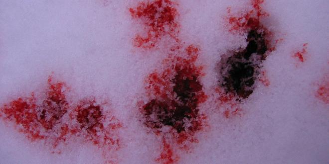 Blutschnee